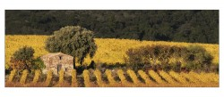 Cabanon-vignes-GEN-004