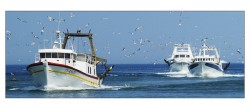 bateaux-retour-de-peche-gen-001