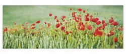 coquelicots-pay-005