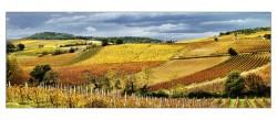 vigne-malepere-pay-002