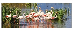 Flamands-Roses-GEN-003