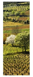 vigne-corbieres-pay-009