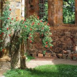 Abbaye-Villelongue-14-2010_0529Villelongue0026