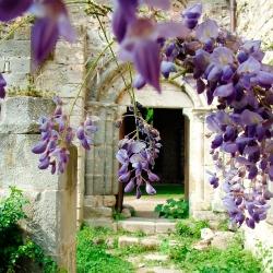 Abbaye-Villelongue-2010_0509Villelongue0161