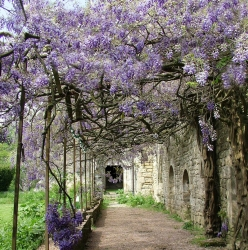 Abbaye-Villelongue-2011_0509Villelongue0001