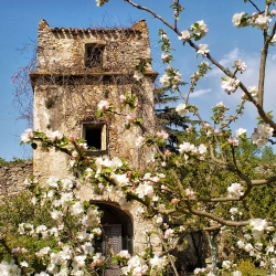 Abbaye-Villelongue-DSC_4156