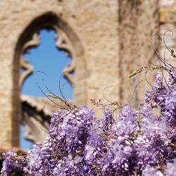 Abbaye-Villelongue-DSC_4166