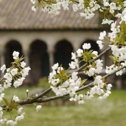 Abbaye-Villelongue-DSC_6675