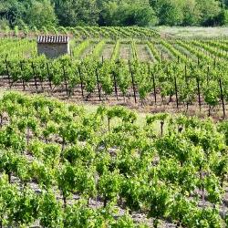 Vigne-et-vin-2010_05230037