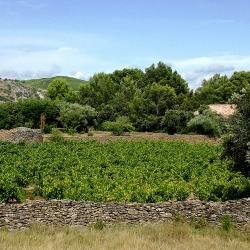 Vigne-et-vin-DSCMikVV01