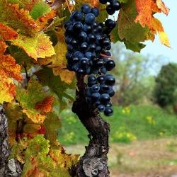 Vigne-et-vin-DSCMikVV02