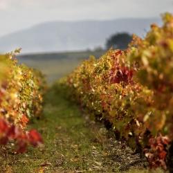 Vigne-et-vin-DSC_4431