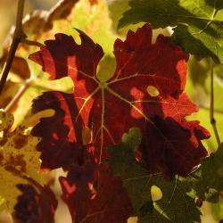 Vigne-et-vin-DSC_4769
