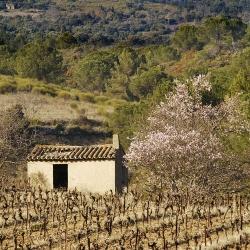 Vigne-et-vin-DSC_6043