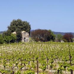 Vigne-et-vin-DSC_6787