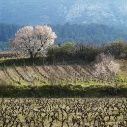Vigne-et-vin-DSC_7904