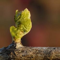 Vigne-et-vin-DSC_8442
