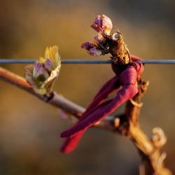 Vigne-et-vin-DSC_8489