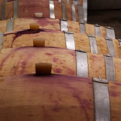 Vigne-et-vin-DSC_8719
