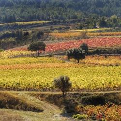 Vigne-et-vin-DSC_8841