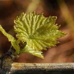 Vigne-et-vin-DSC_9023