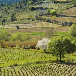 Vigne-et-vin-_PLD3808